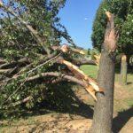 tree damage lawyer